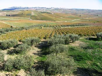 olivenoel05