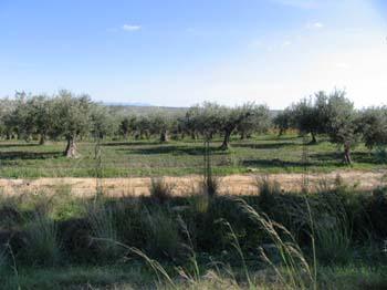 olivenoel06