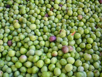 olivenoel09